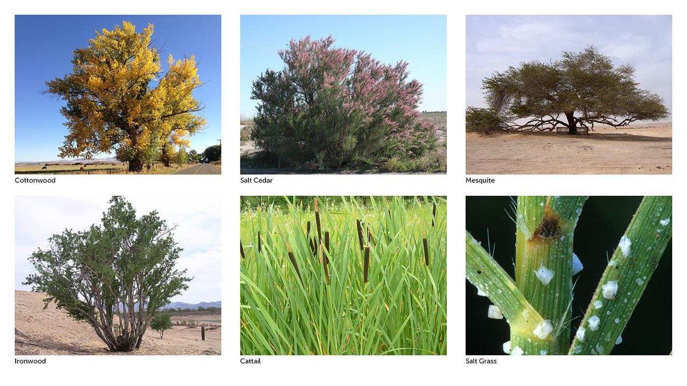 Favored Vegetation
